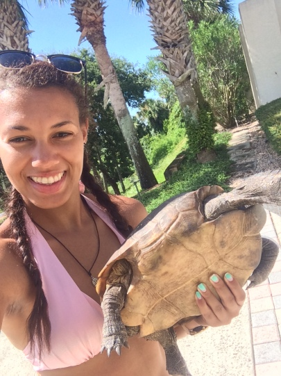 Tortoise rescued by Ponte Vedra Beach