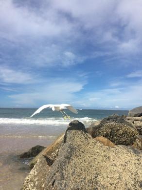 Vilano Beach Seagull