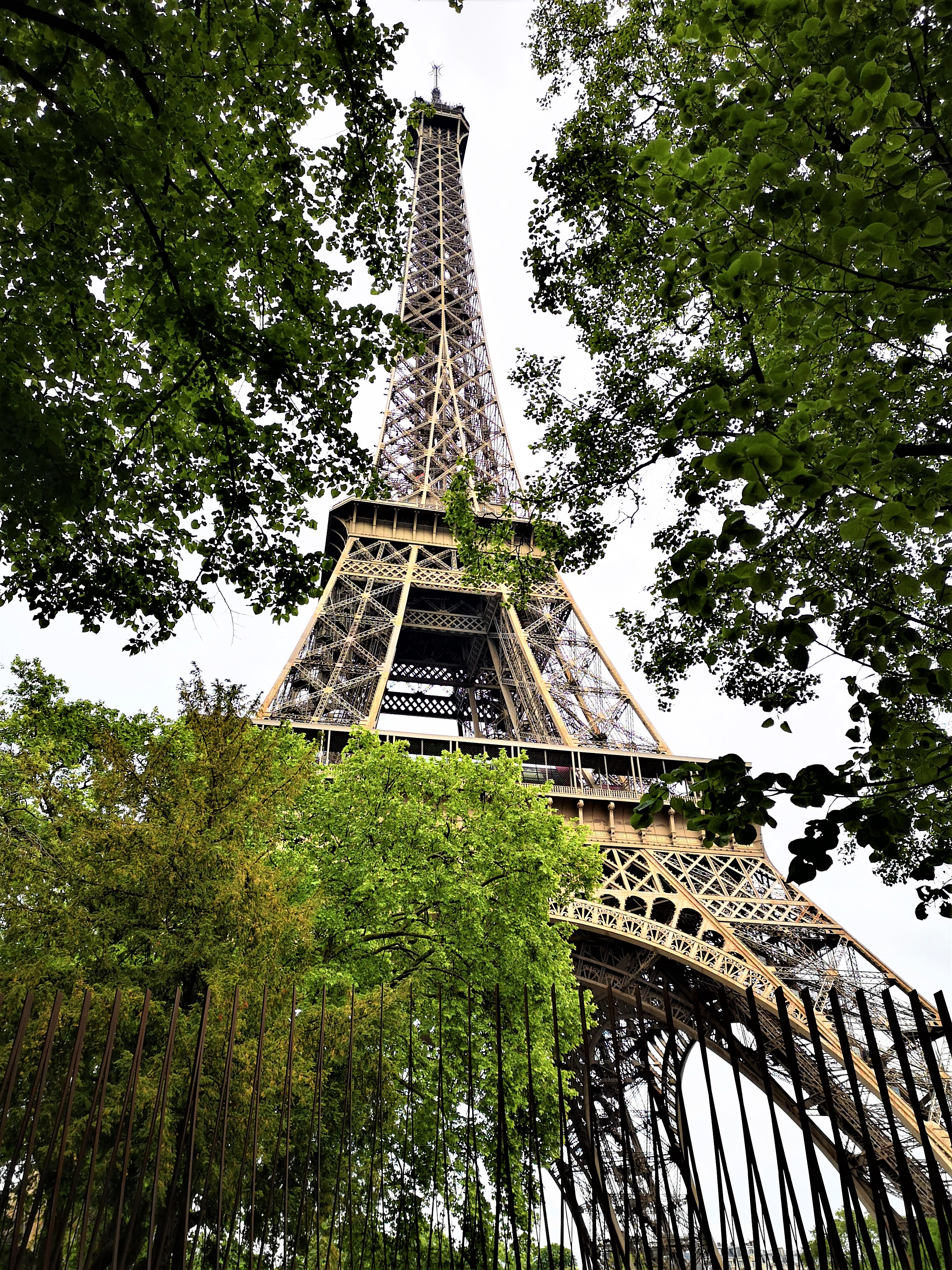 The Eiffel tower through the stunning trees